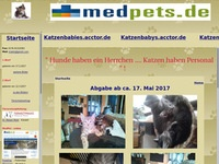 Katzenbabies aus Fulda suchen Familienanschluss